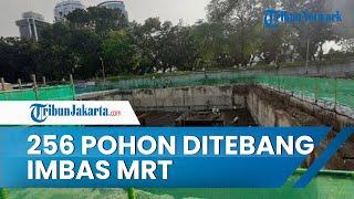 Imbas Pekerjaan Konstruksi MRT Jakarta di Stasiun Glodok & Stasiun Kota, Sebanyak 252 Pohon Ditebang
