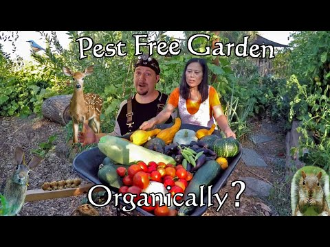 How To Grow A Pest Free Garden Using Only Organic Gardening Methods