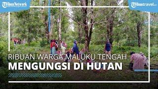 Gempa di Maluku Tengah, 7.227 Warga Mengungsi di Hutan