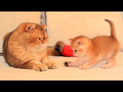 Kitten Arnold meets his dad William for the first time