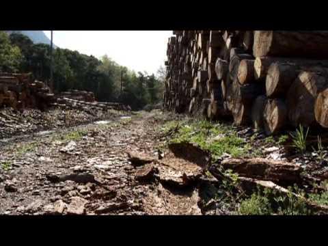 La respiration du bois