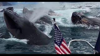 Стая китов застала туристов врасплох