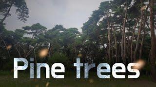 소나무숲 프리스타일 드론 비행 Freestyle drone