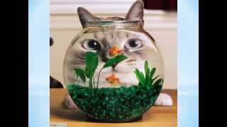 Funny Cats Photo Slideshow Videos - Super Cool Funny Cat Images