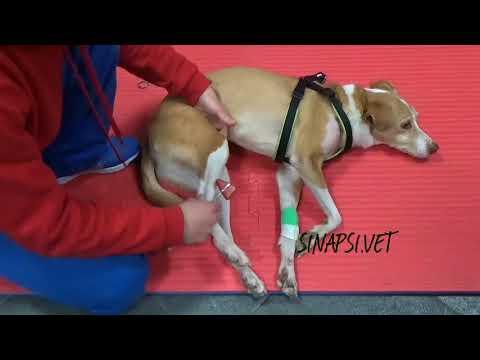 Unguento analgesico per le articolazioni e riscalda