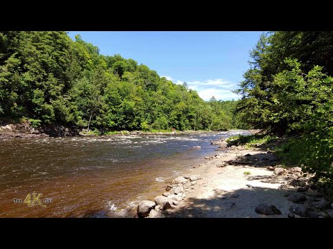 3 Hours of pure untamed summer forests of the Outaouais