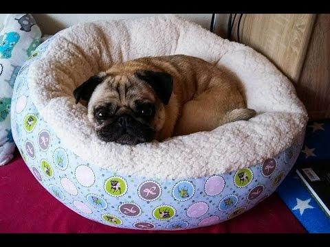 DIY Hundekorb nähen