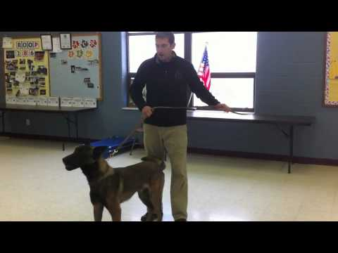 Teaching a dog to release a toy
