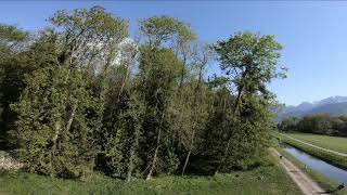 FPV Spring Forest