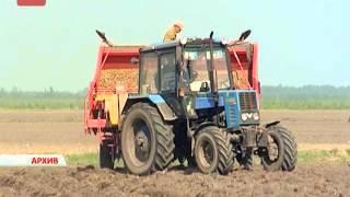 В департаменте сельского хозяйства сегодня обсудили развитие картофелеводства