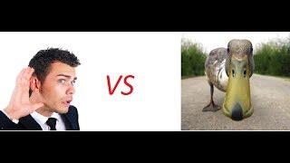 Анимация Человек vs Утка