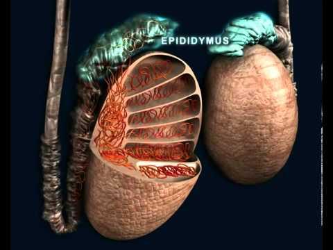 Metodi di trattamento chirurgico di iperplasia prostatica benigna
