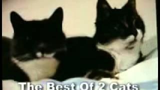 Лучшее из двух говорим кошек