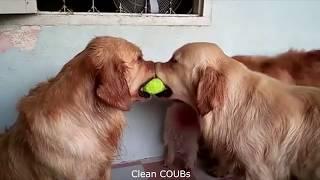 Прикольные видео  | COUBs funny videos #8