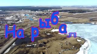 Рыбалка в чесноково кемеровская область лето 2020