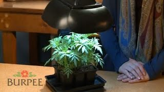Burpee Ultimate Grow Light