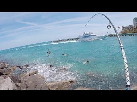 Fiskeri efter rovfisk i Florida