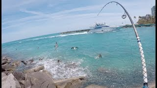 Florida Mullet Blitz - Fishing a QUESTIONABLE Spot for Insane Action