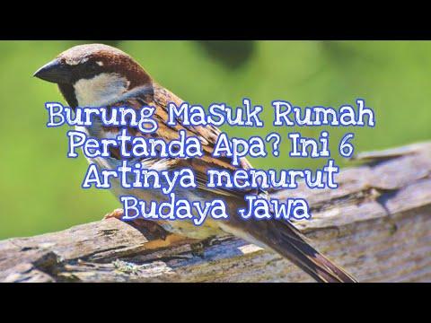 6 Arti Burung Masuk Rumah Menurut Primbon Jawa