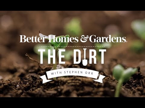 Seed Starting | The Dirt | Better Homes & Gardens