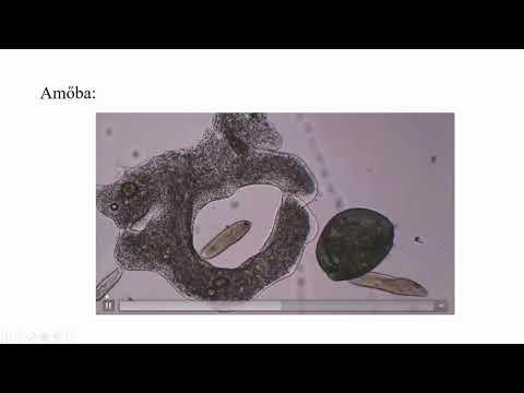 A paraziták testből való eltávolításának módjai
