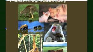 Vertebrate Diversity: Mammals
