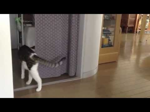 Cat Never Tires Of Chasing Toy Snake