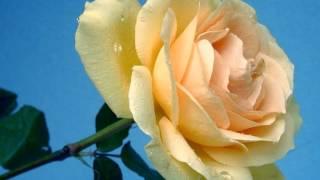 O Sanam O Sanam Mere Janam [Full Song] (HD) - Ravan Raaj