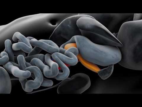 Wie sie behandeln p.s.a. Prostata