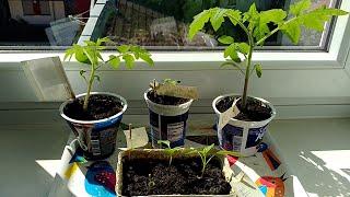 Mein Garten auf der Fensterbank