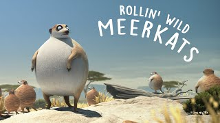 ROLLIN' SAFARI - 'Meerkats' - what if animals were round?