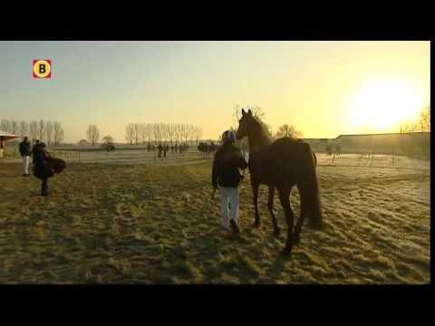 Traditioneel metworstrennen in Boxmeer
