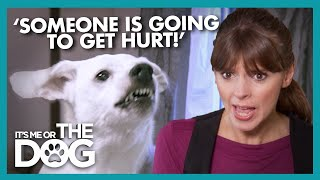 Dangerous Dog at Risk of Being Put Down For Biting Guests | It's Me or The Dog