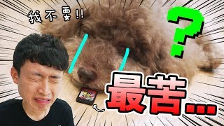 當小狗不小心舔到【史上最苦】switch遊戲卡?Muffin變臉了!