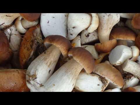 Можно ли беременным грибы?