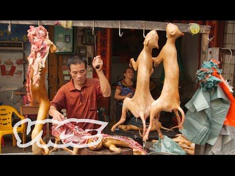 Anteprima Video Festival della Carne di Cane in Cina