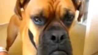 Oscar the talking dog Video