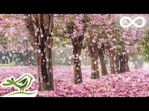 Beautiful Piano Music: Relaxing Music, Romantic Music, Sleep Music, Study Music ★137