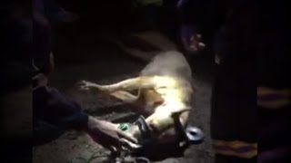 Firefighters Resuscitate 2 Dogs Pulled From A Burning Home