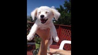 Веселые собачки 2018 Видео приколы про щенков