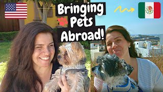 Advice & Tips For Traveling With A Pet {Travel With Pet Mexico}/International Travel With dog