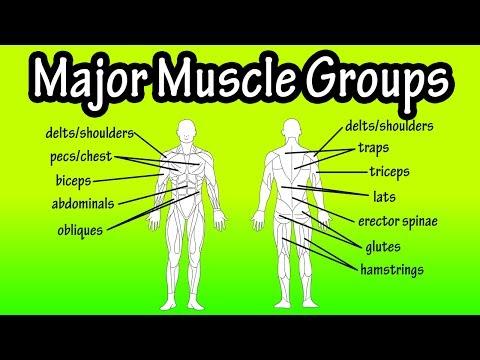 Pourquoi ne se développent pas les muscles des pieds
