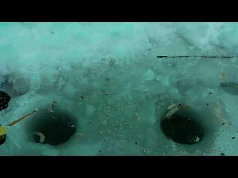 Карась. Подледный лов. Озеро Яровое Курганской области 2.12.2018 года