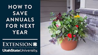 How to Save Your Annuals for Next Year