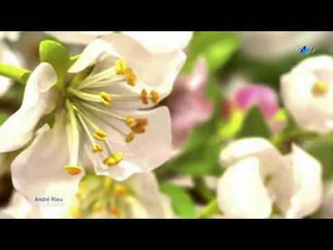 Relaxe com A Beleza Musical de Andre Rieu
