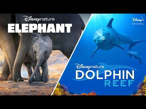 Elephant Movie Trailer
