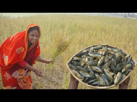 Mustard Cultivation SHORSHE KOI RECIPE Traditional Cooking Climbing Perch Fish Curry SUMMER COOK