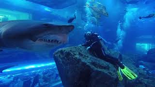 Shark Dive Dubai Aquarium - Close Encounter