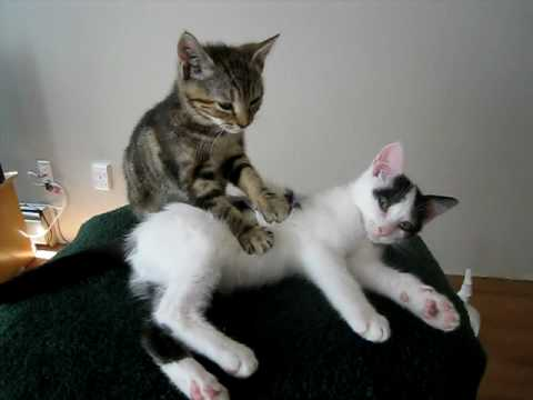 Puppies and Flowers : Kitten Massage Therapy
