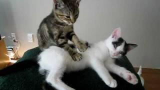 Кот массажист